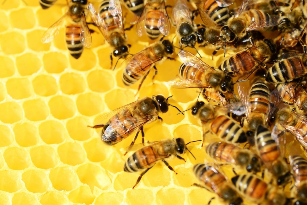 api e miele